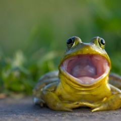 SpaceFrogs